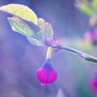 это цветочки, ягодки будут потом :: Тася Тыжфотографиня