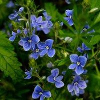 Цветок :: Александр Тышко