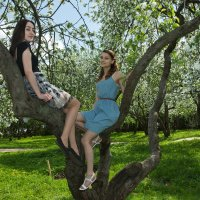 коломенскоев период цветения яблонь :: юрий макаров