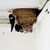Ласточкино гнездо. :: Murat Bukaev