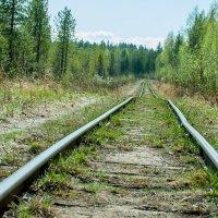 Действующая Узкоколейная железная дорога :: Яна Старковская