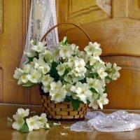 Цветет и пахнет во дворе...чубушник :: Наталья Джикидзе (Берёзина)