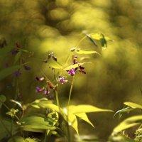 Цветочек :: sorovey Sol