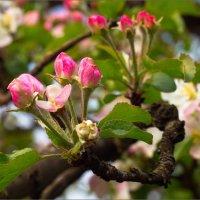 Весна :: Александр Фёдоров