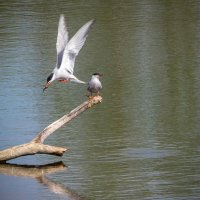 без труда не выловишь и рыбку из пруда-2 :: Сергей Цветков