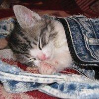 Малыш спит :: Елена Шишлянникова