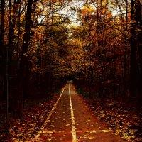 Осенняя дорожка :: Александр Сидоров