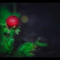Красна ягодка, да на вкус горька... :: Александр Вивчарик
