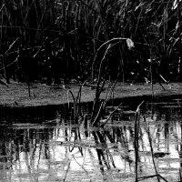 Зеркало былого...................... :: Валерия  Полещикова