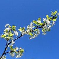 Весны цветенье.... :: El Кондукова