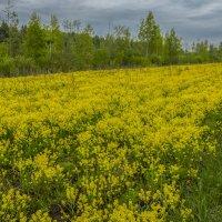 """Yellow River"" :: Михаил (Skipper A.M.)"