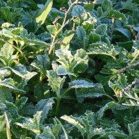 заморозок на траве :: игорь