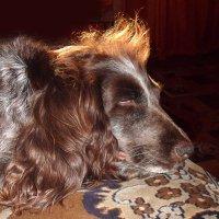Не будите спящую собаку! :: Наталья