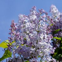 Весна :: Вероника Изотова