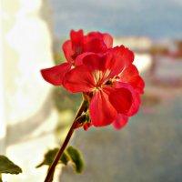 цветок 2 :: Валерия Воронова