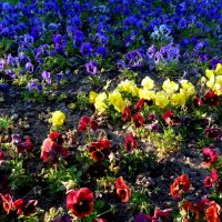 майские цветочные поляны 4 :: Александр Прокудин