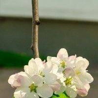 Городские цветы :: Вячеслав Печенин
