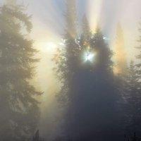 Звезда путеводная в тумане :: Сергей Чиняев