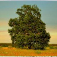 У лукоморья дуб зелёный... :: Геннадий Титоренко