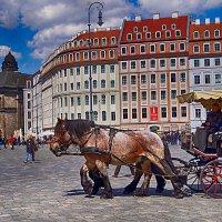 Dresden. :: Alex