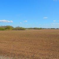 весенние поля :: linnud