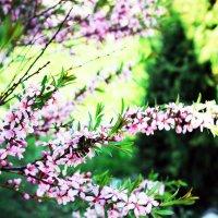 Весна :: раиса Орловская