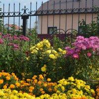 райский сад :: Светлана Ларионова