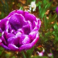 Цветы в саду 2. :: Василий Ярославцев