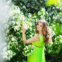 Яблоневый цвет :: Елена Сметанина