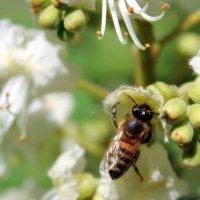 Пчела Майя. :: Валентина ツ ღ✿ღ