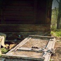 Дверь в прошлое :: Яна Блэк