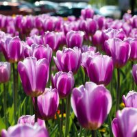 Весна :: Людмила Бадина