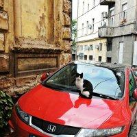 Место, где собаки не достанут :: Tatiana Belyatskaya