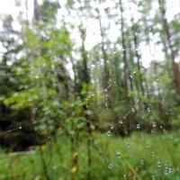 Дождливое настроение :: Елена Якушина