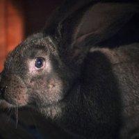 Кролик :: Георгий Морозов