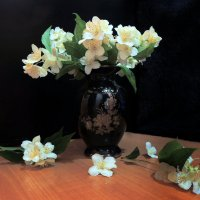 Жасмин цветет :: Павлова Татьяна Павлова