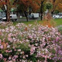 Городские цветы :: Владимир