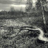Коряга :: Наталья Кузнецова