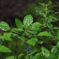 Весенний дождь :: Татьяна Богачева