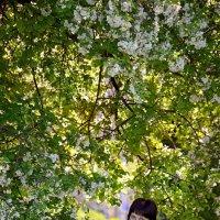 весна :: Татьяна Минченкова