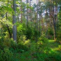 Небесный луч пробрался в лес,заставив все вокруг очнуться... :: Алла Кочергина