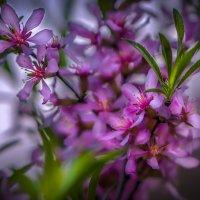 Весна :: Алексей Строганов