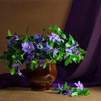 Весенние цветы :: Вера