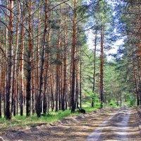 Леса учат человека понимать прекрасное. :: Валентина ツ ღ✿ღ