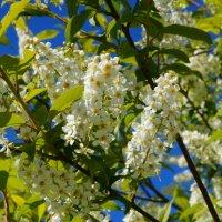 аромат весны... :: Alexandr Staroverov