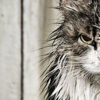 ..уже и в душ нельзя сходить - сразу в интернет всё выложат. :: Птица ~