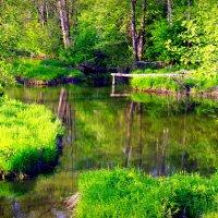 Красота нашей природы :: Ольга Нежикова