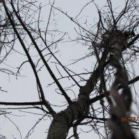 милые ветви :: Polina Pavliuk