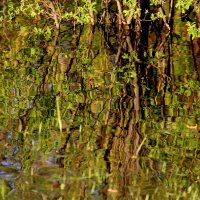 Акварельная весна.....  отражение  в в пруду................... :: Валерия  Полещикова