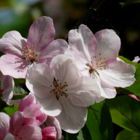 весна :: Alla Swan